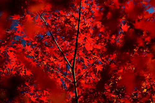 赤のチカラ